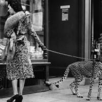 cheeta shopping
