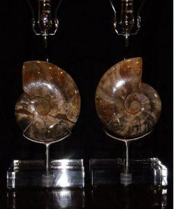 polished ammonite lamps