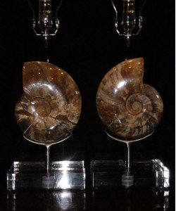 polished ammonite lamps