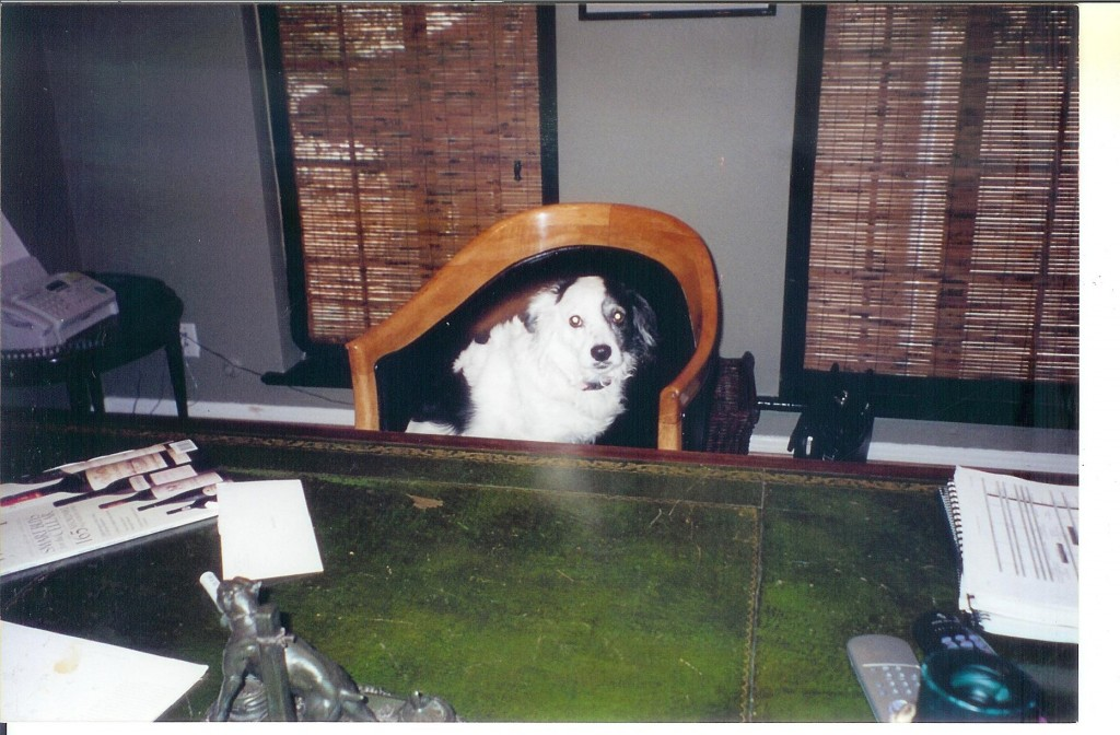 Dog at desk