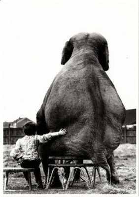elephant sitting, dangers of sitting, blogger butt, gluteal amnesia, hamstring dominance