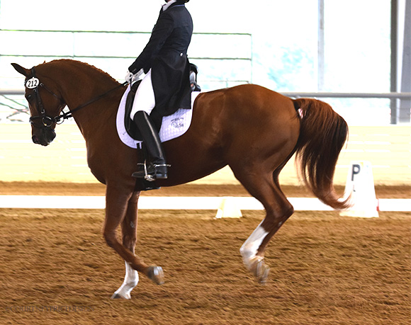 dressage_performance, dressage, on www.CourtneyPrice.com