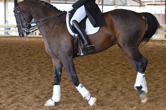 dressage_rehearsal, dressage, on www.CourtneyPrice.com