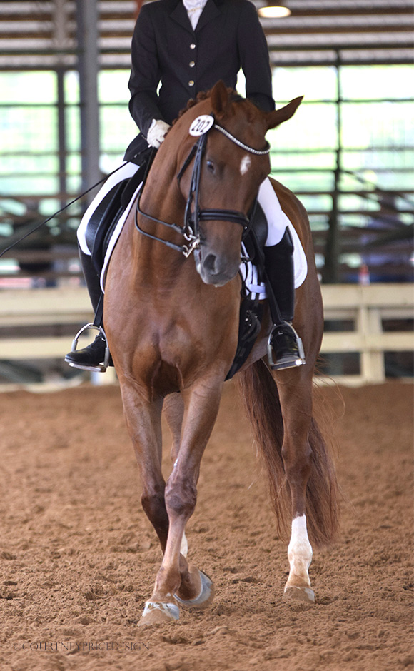 Dallas dressage, on www.CourtneyPrice.com