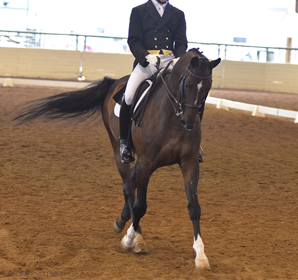 Dallas Equestrian, dressage, on www.CourtneyPrice.com
