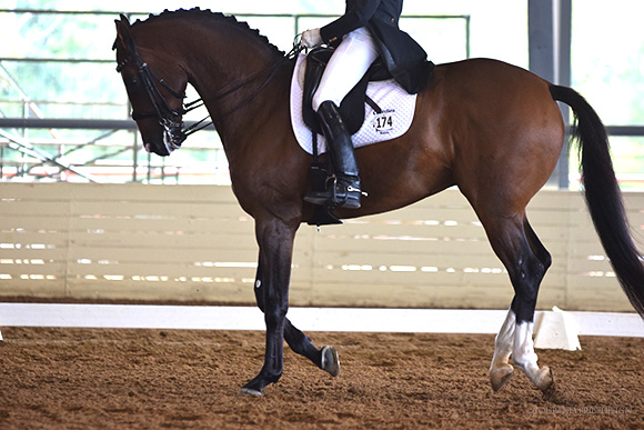 horse_show, dressage, on www.CourtneyPrice.com