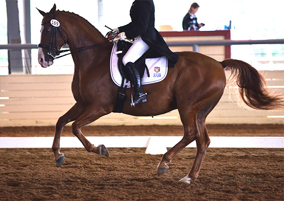 show_horse, dressage, on www.CourtneyPrice.com