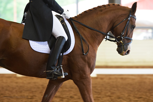 dressage, on www.CourtneyPrice.com