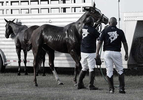 Post Polo Match- Hosing Down The Horses on www.CourtneyPrice.com