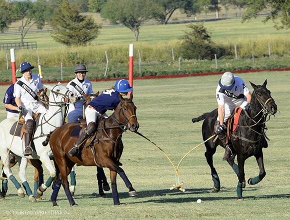 Polo ponies on www.CourtneyPrice.com