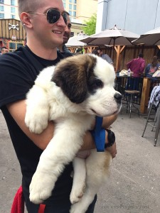 st-bernard-rescue, mophie rescue, best in branding, sxsw
