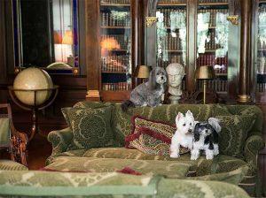 Carolyne Roehm dogs