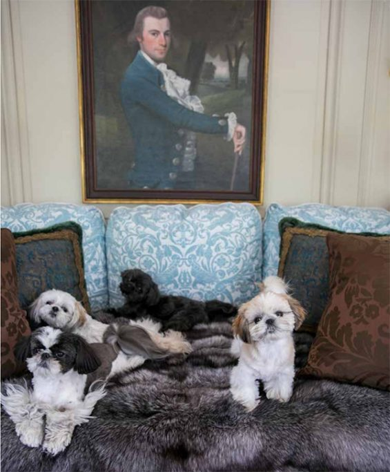 Robert Couturier dogs, on www.CourtneyPrice.com